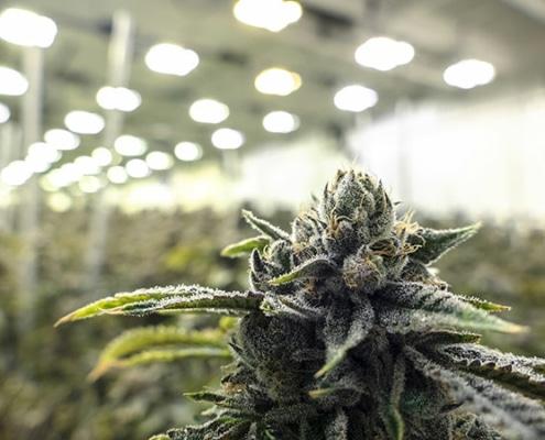 Marijuana  Laws CA